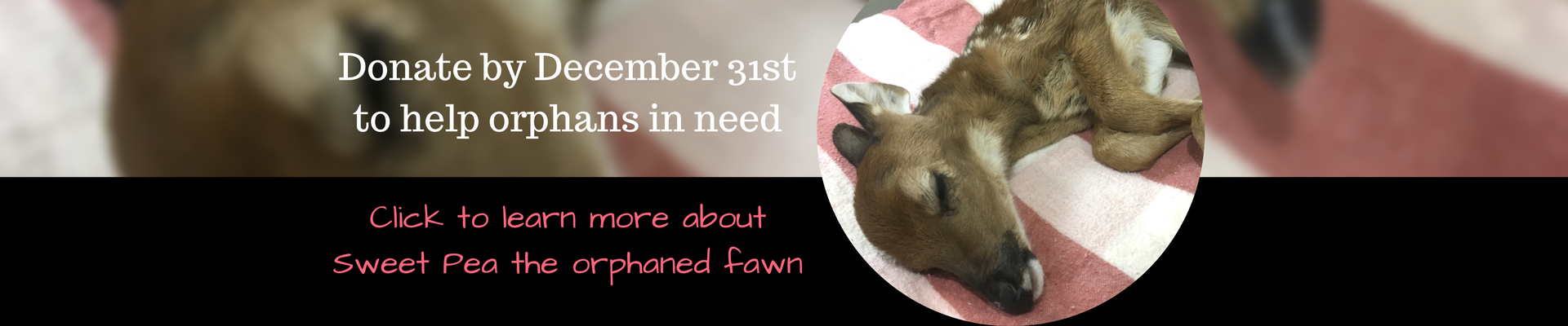Help orphans like Sweet Pea get a second chance